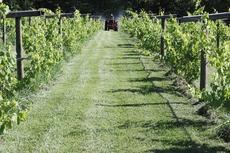 "<div class=""source"">Donna Carman</div><div class=""image-desc"">Larry Yaden makes his way carefully between the rows of grape vines as he sprays. His two vineyards of seyval and chamboursin grapes, located on Ky. 1649 (Dry Ridge Road) must be sprayed every 14 days during the growing season of May through November.</div><div class=""buy-pic""><a href=""/photo_select/12614"">Buy this photo</a></div>"