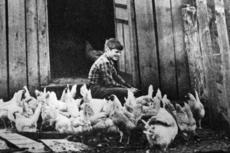 """<div class=""""source"""">Casey County News file</div><div class=""""image-desc"""">John Russell, a fourth grader at Middleburg, feeds his chickens on Dec. 8, 1980, on Dry Ridge. He is the son of Mr. and Mrs. Marvin Russell.</div><div class=""""buy-pic""""></div>"""
